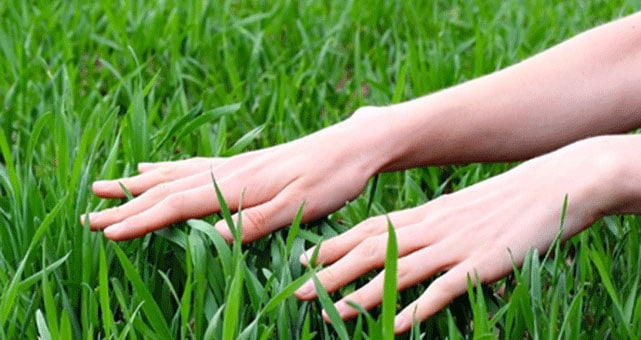 Prepare Lawn For Winter winter preparation for your lawn is like a massage |
