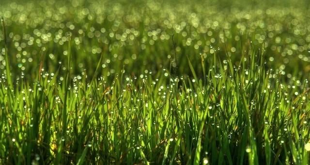 Growing-Lawn-Preparing-in-Fall