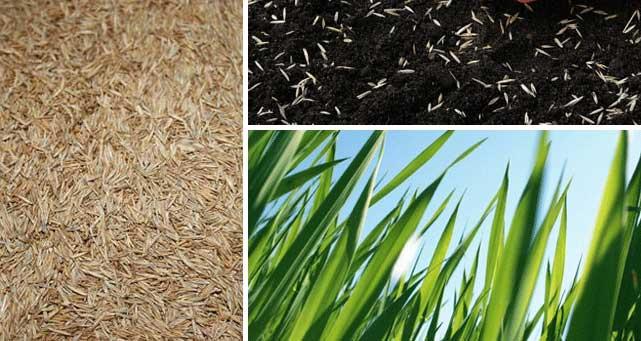 grass-seed-shade