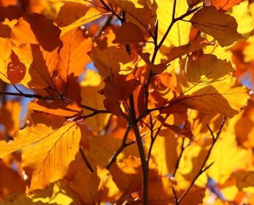23-things-to-do-fall-gardening