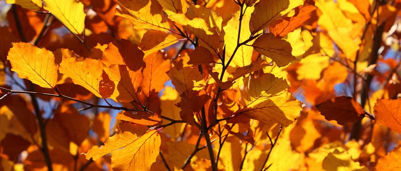 fall-season-landscape-preparation