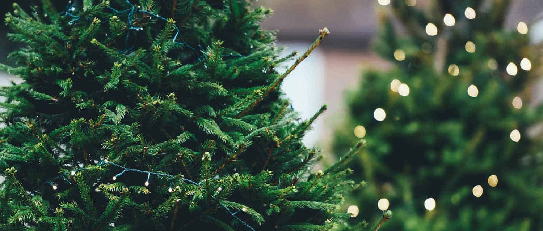 fresh-cut-christmas-trees-mississauga-ontario