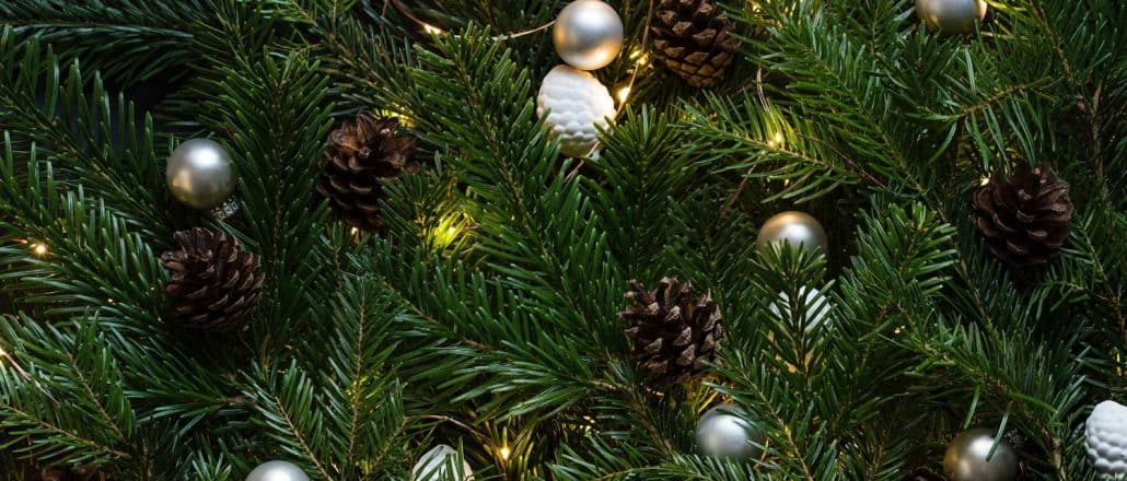 different types of christmas trees useful pros cons tips - Different Kinds Of Christmas Trees
